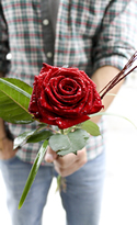 The Hero Rose - A Single Rose in a Luxury gift box